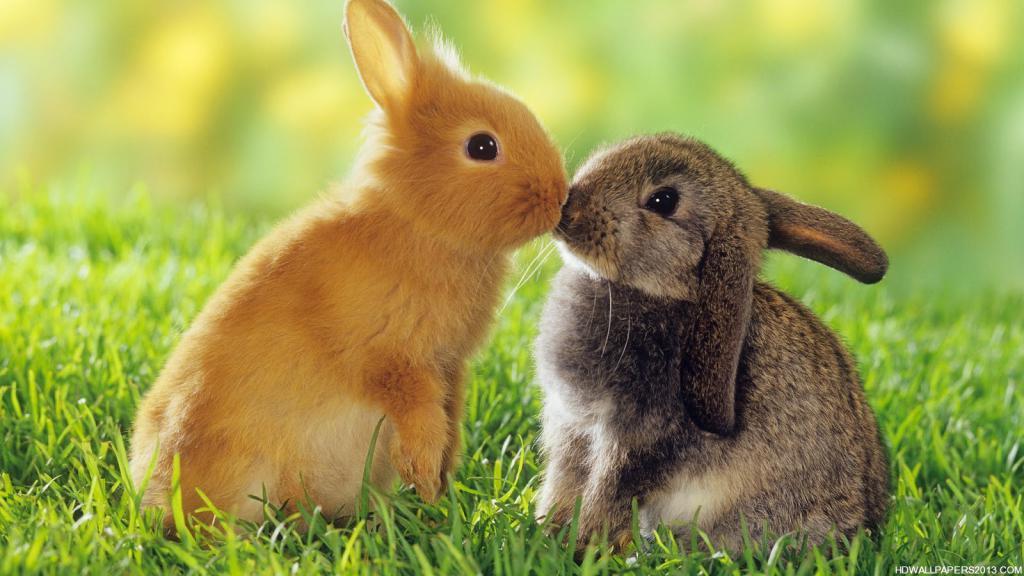 Zwierzęta ogłoszenia Śródmieście ogłoszenia drobne zwierzęta Śródmieście darmowe ogłoszenia zwierzęta Śródmieście