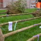 Sadzimy nowe drzewa w stolicy