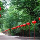 Mała Trauma Z Chińskimi Lampionami W Tle